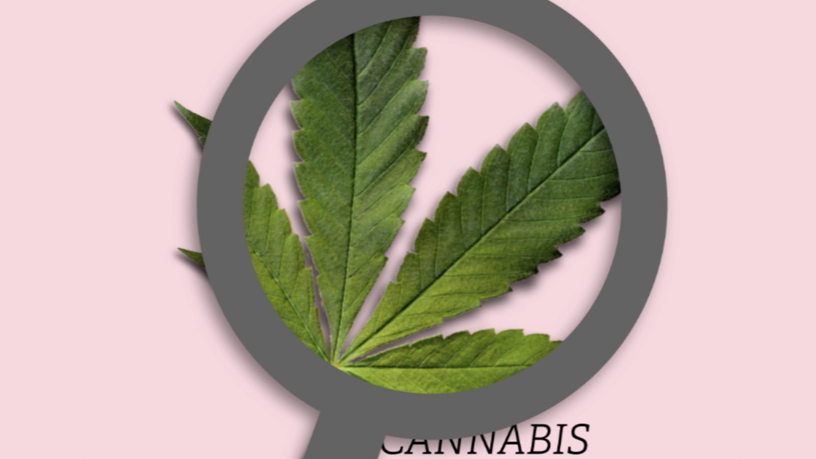 mobile lab fundraising campaign video still of A cannabis leaf with a magnifying glass over it