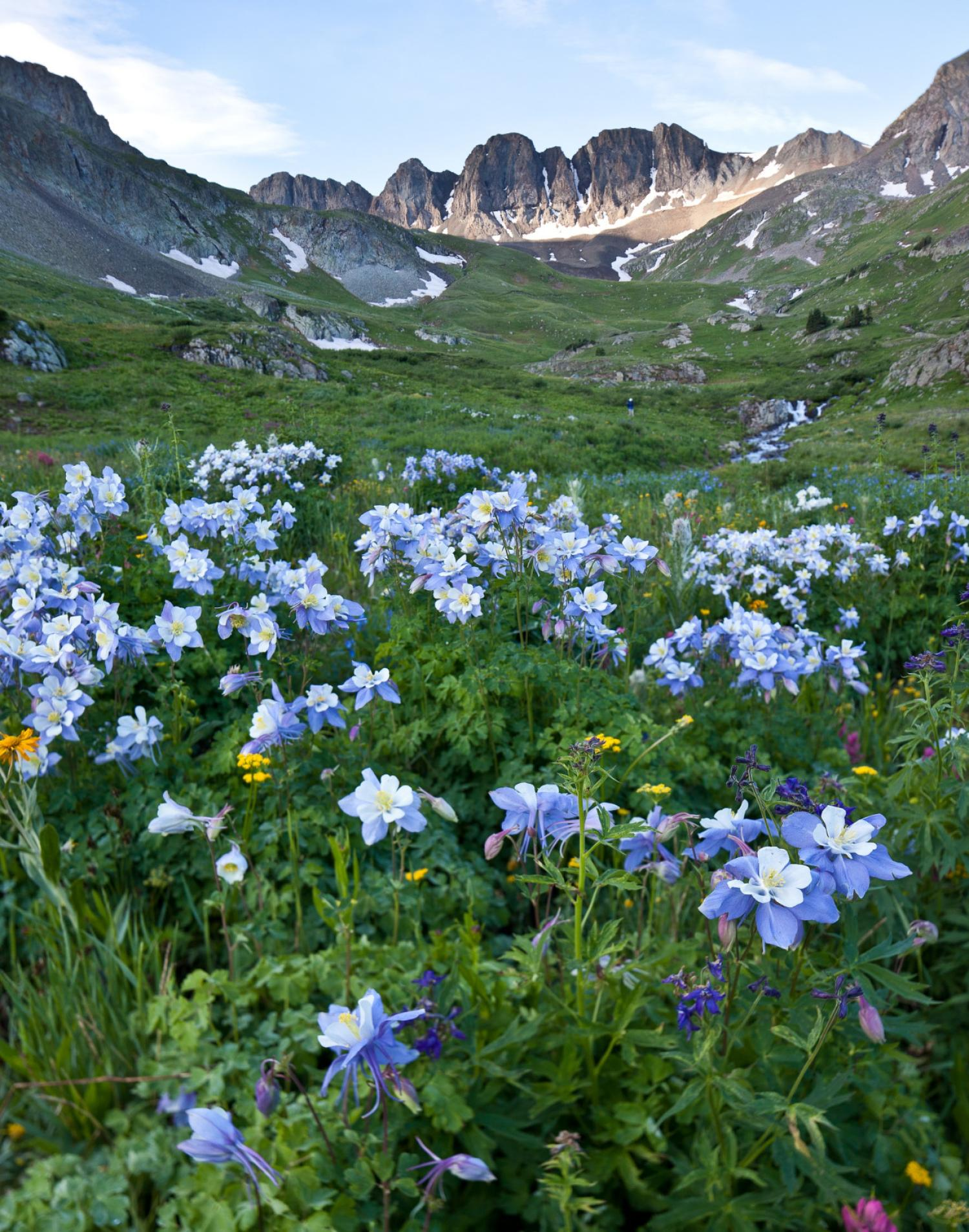Wildflower meadow along the Alpine Loop in Colorado