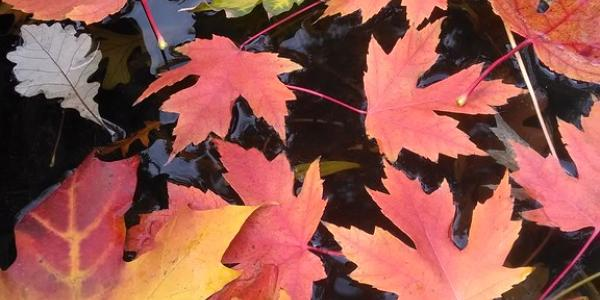 Leaves sit on a pond's surface