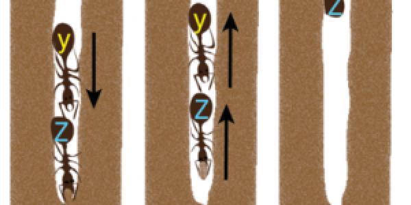Ants Traffic Flow