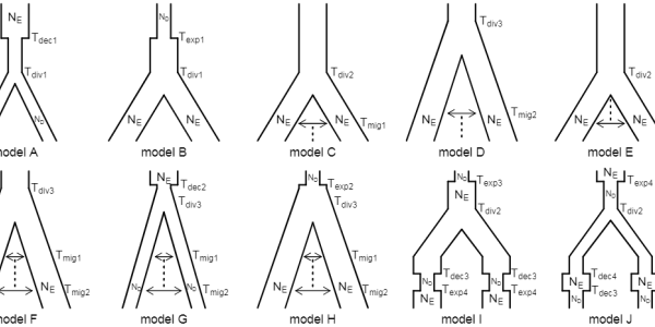 Examined demographic scenarios. Abbreviations are shown for each model parameter; abbreviations are reused for parameters that share a prior distribution