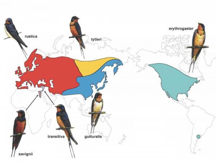 Map Figure
