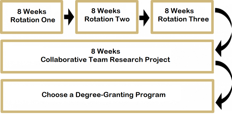 Students complete three eight week laboratory rotations and one eight week collaborative team research project before selecting a degree-granting program to pursue.