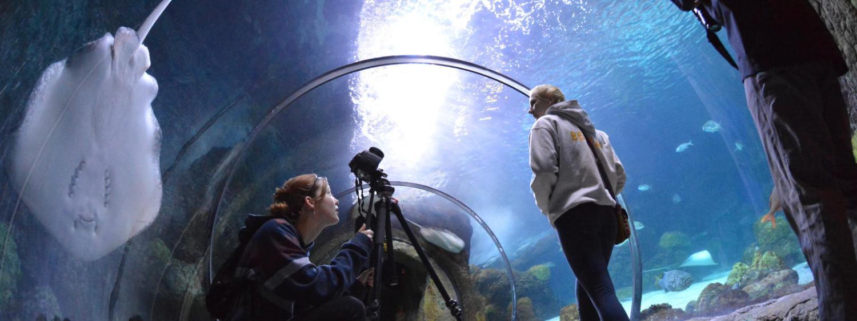 CMCI students film and shoot at the Denver Aquarium