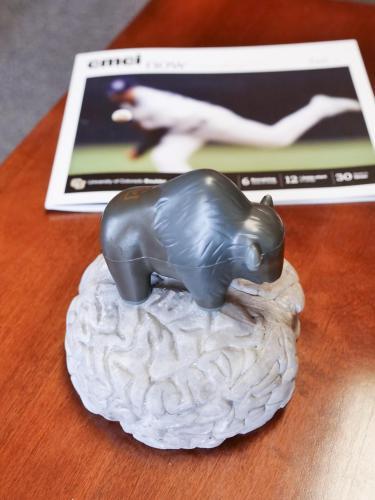 buffalo on the brain