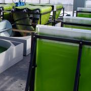 Ben Mousseau and algae system