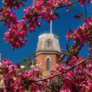 Spring Blossoms (Photo by Casey A. Cass/University of Colorado)