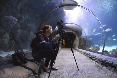 Taking pictures in the Aquarium.