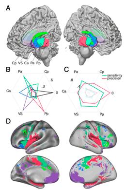 neuro scan graphic