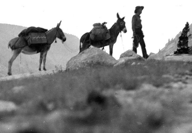everett reuss and burros