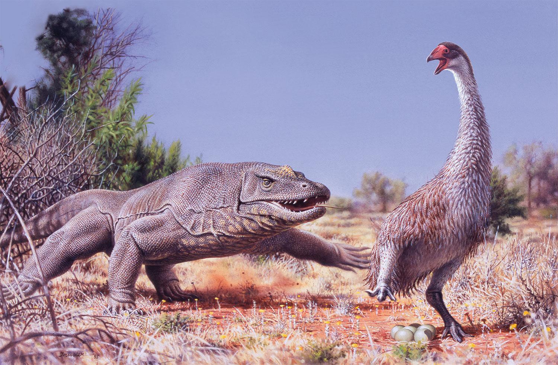 australian animal illustration