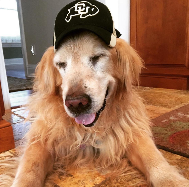 Show your buff pride! Photo of a golden retriever wearing buff gear