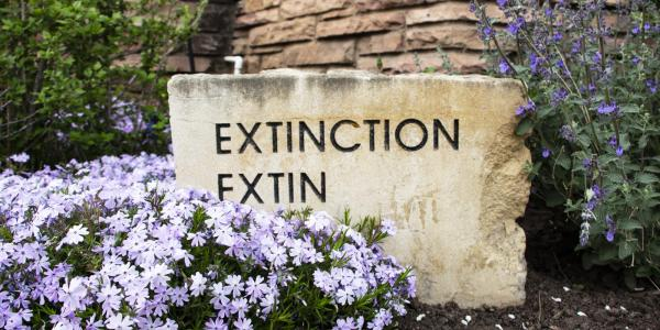 Extinction inscription