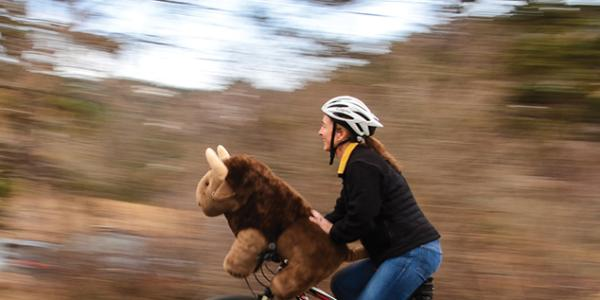 woman and buffalo ride bike