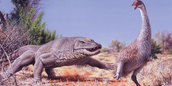 australian illustration