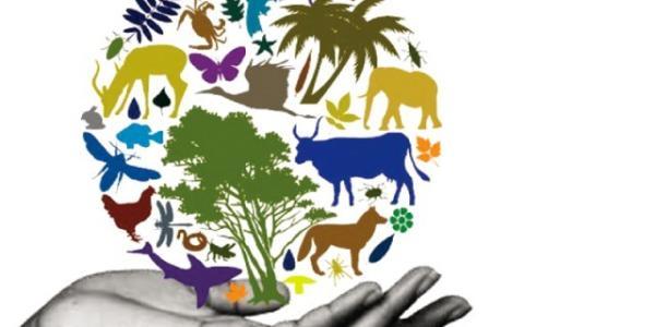 biodiversity illustration