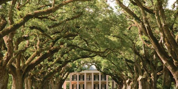 southern grandeur