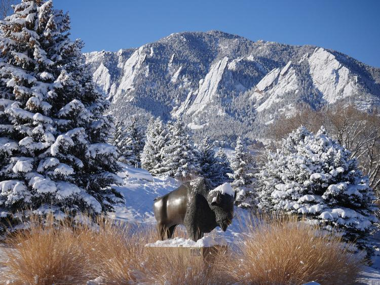 snow on a buffalo statue