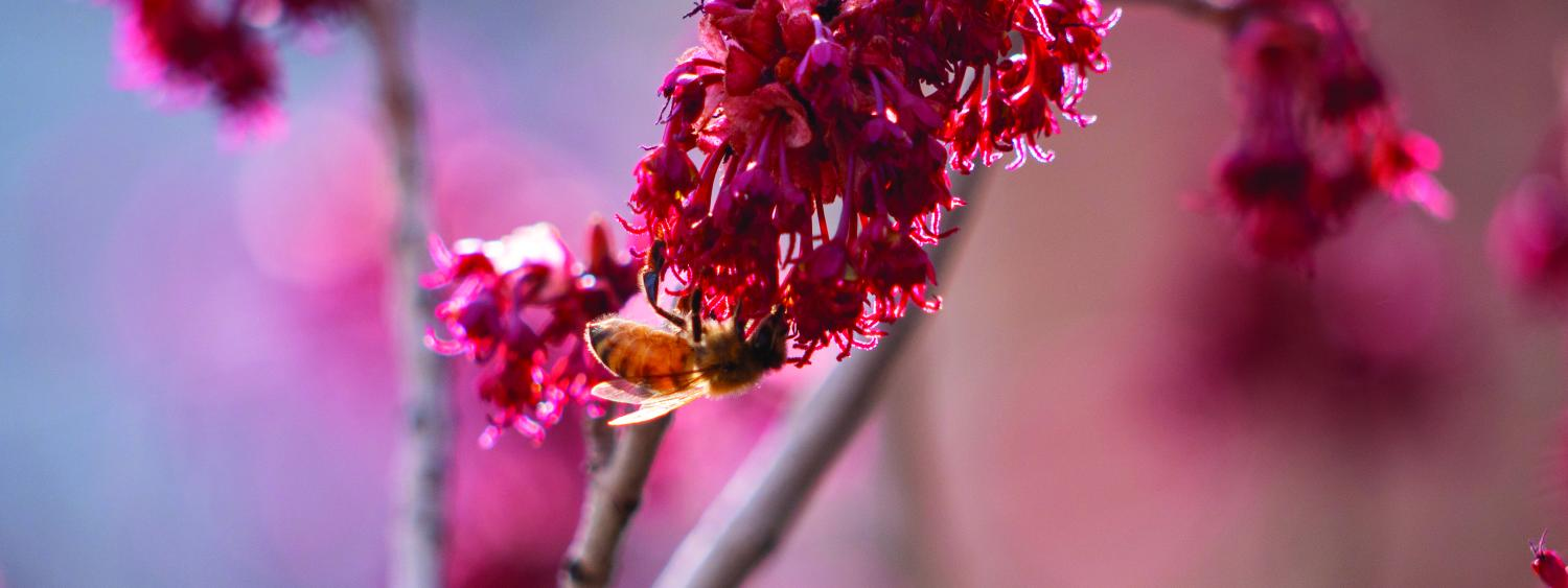 a bee sits on a flower