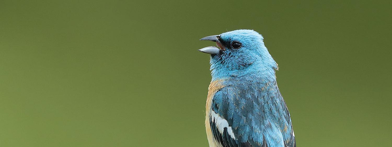 birds of Boulder