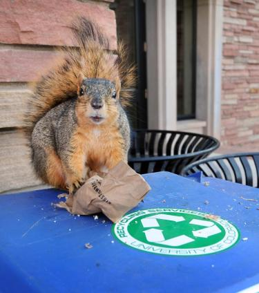 Squirrel helping recycle