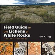 lichens cover