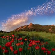 Red Tulips at Chautauqua Park