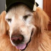 CU dog