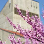 Engineering building with purple tree