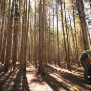 scavenger hunt in woods