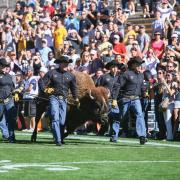 Ralphie and handlers streak across Folsom Field during the 100th Homecoming game
