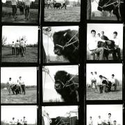 ralphie contact sheet