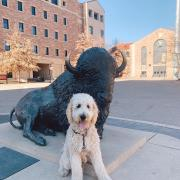 Goldendoole posed by Ralphie statue