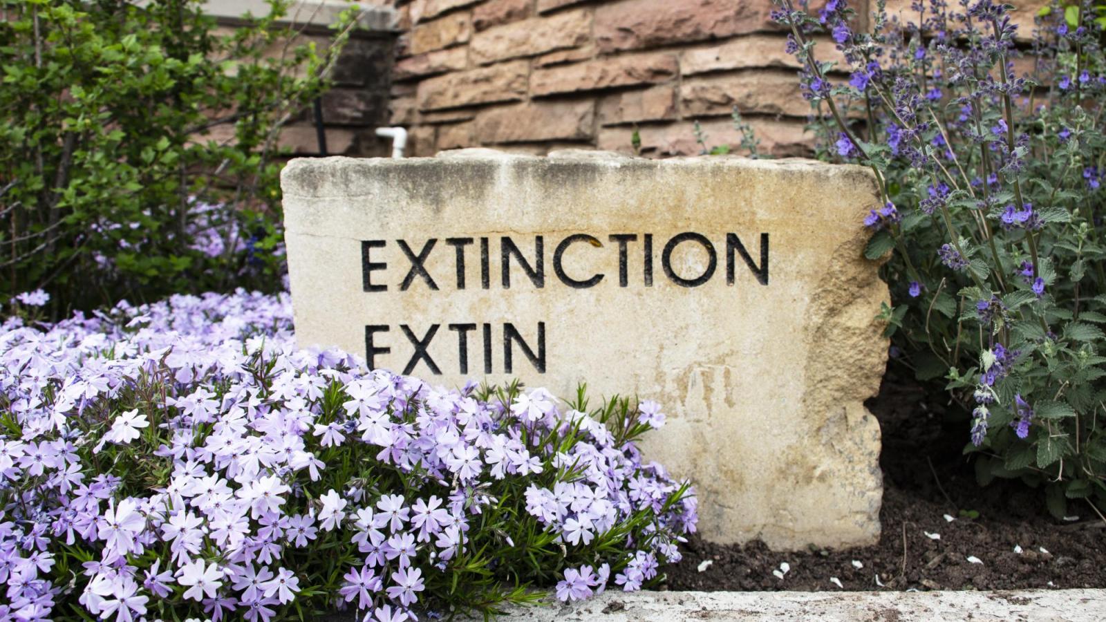 Extinction inscription