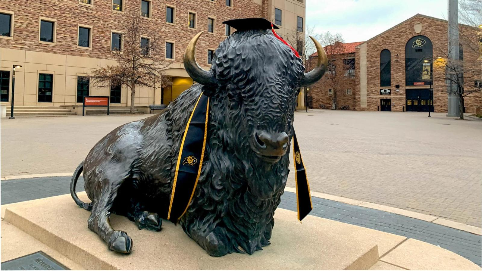 Photo of campus buffalo statue with cap, tassel and stole