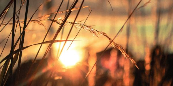 wheatfield sunrise