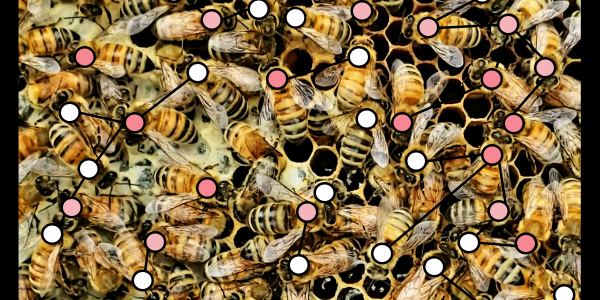 Bees cover