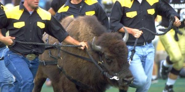 Ralphie runs across the field before a football game.