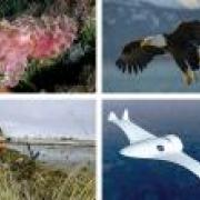 A collage showing things that have inspired robotic materials research, including banyan trees, eagles and the cuttlefish.