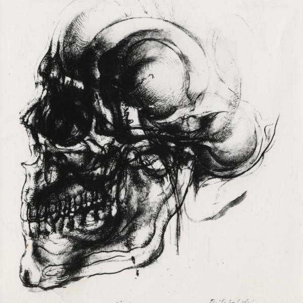 Drawing of skull