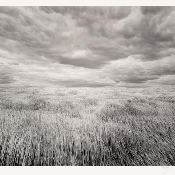 Grey-scale image of a wheatfield