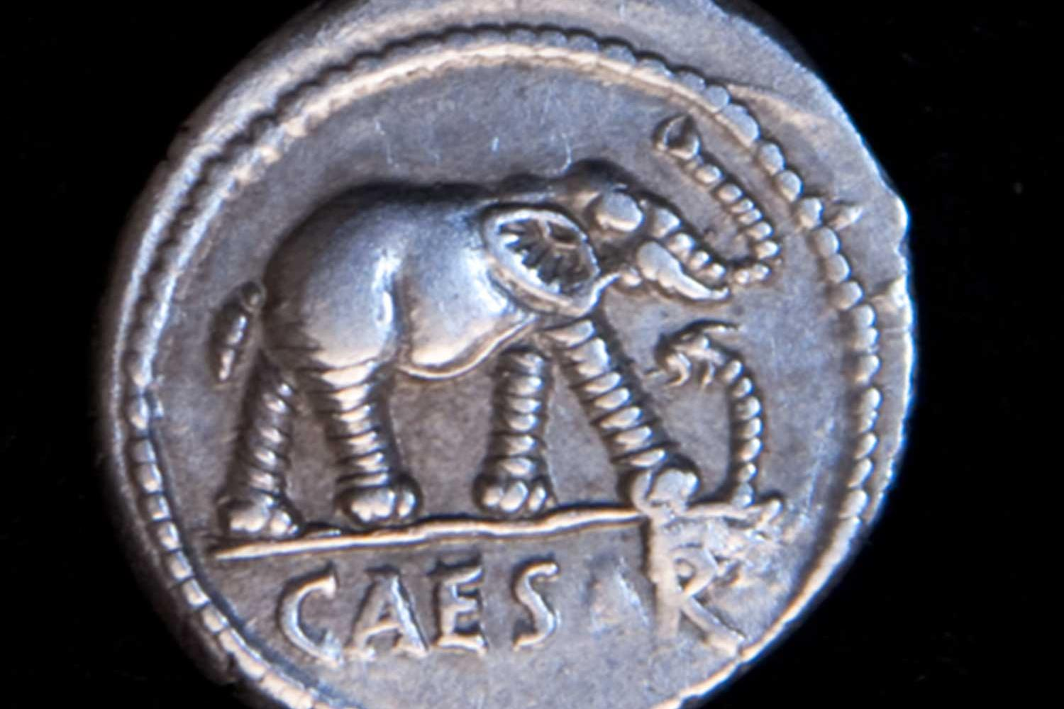 Detail of a silver coin with an elephant stamped on it with the word Caesar underneath