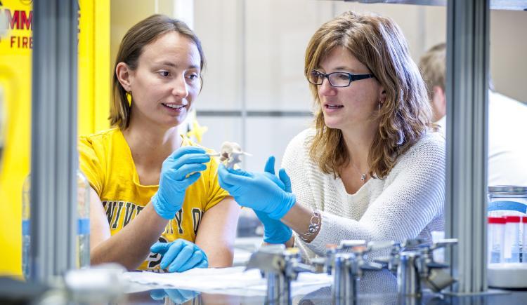 In the Biomechanics and Biometics laboratory