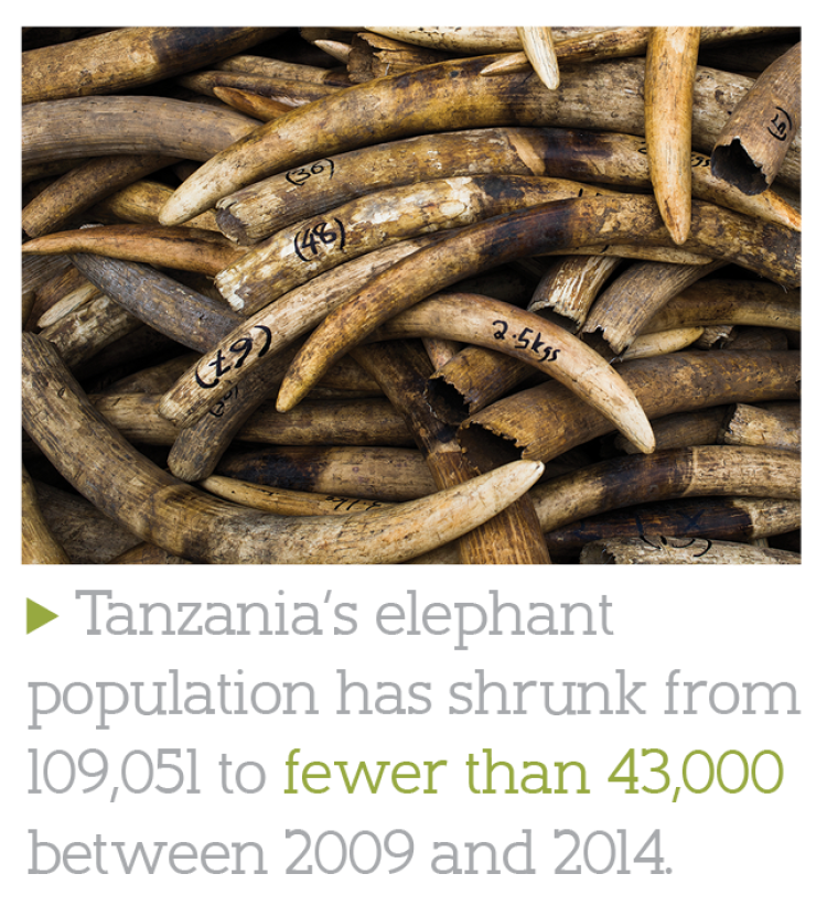 Tanzania's elephant population has shrunk from 109,051 to fewer than 43,000 between 2009 and 2014.