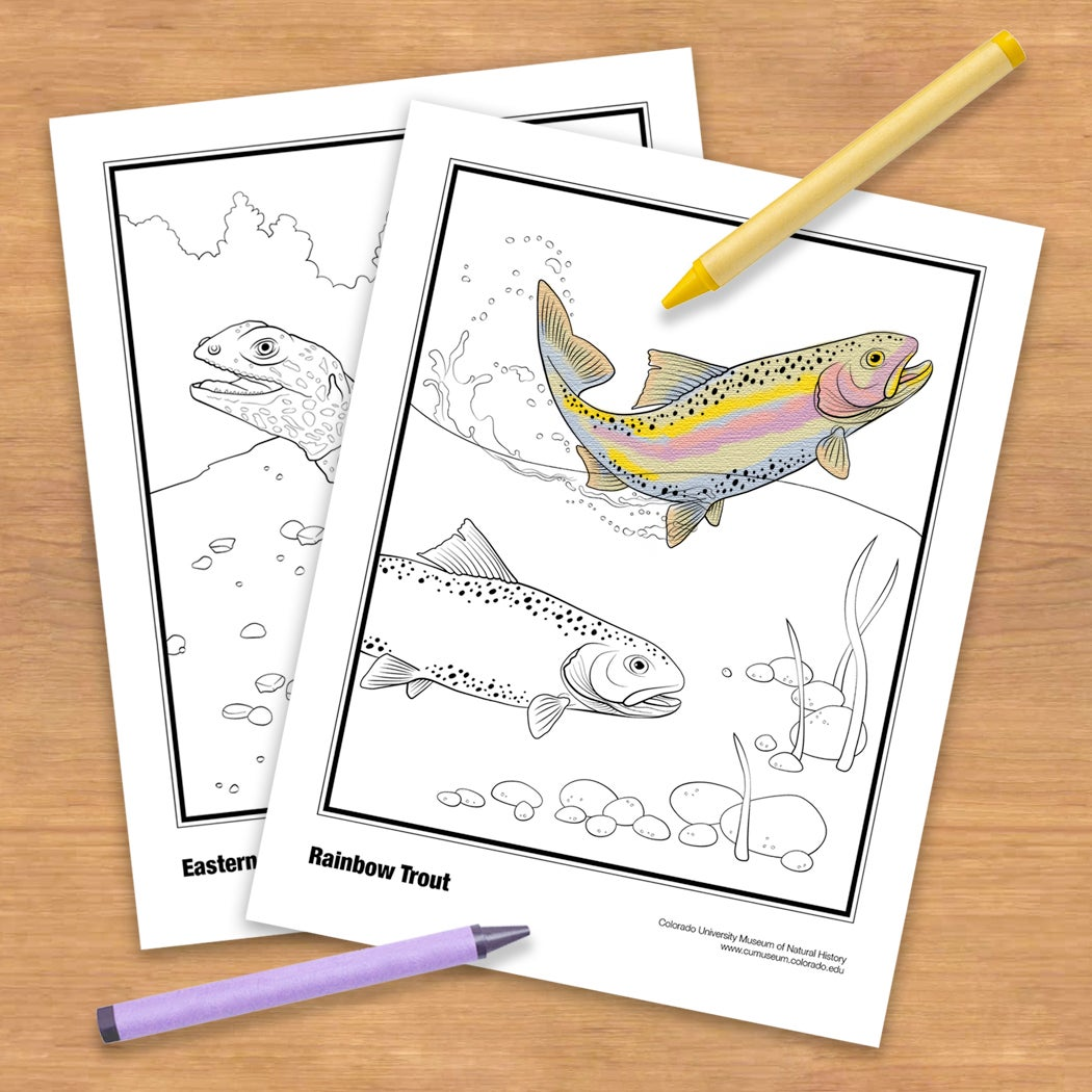 coloring pages with trout
