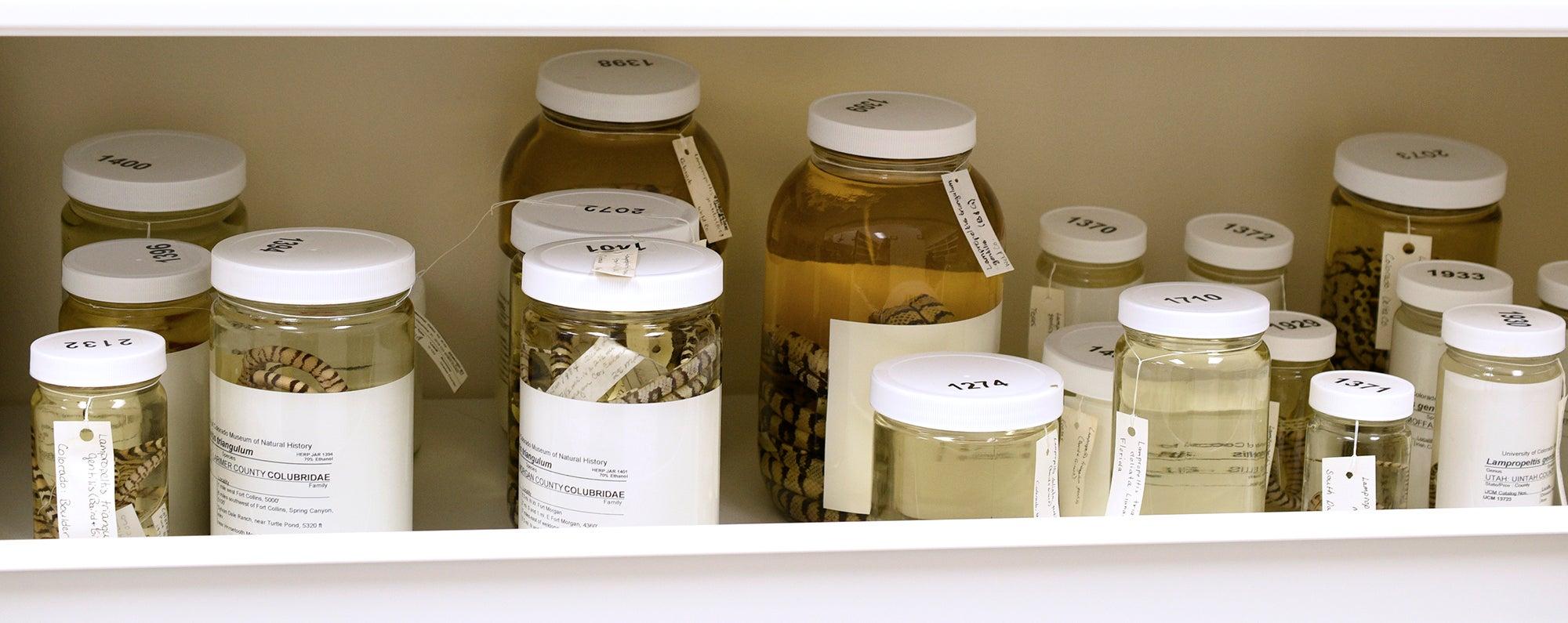 Specimens in jars