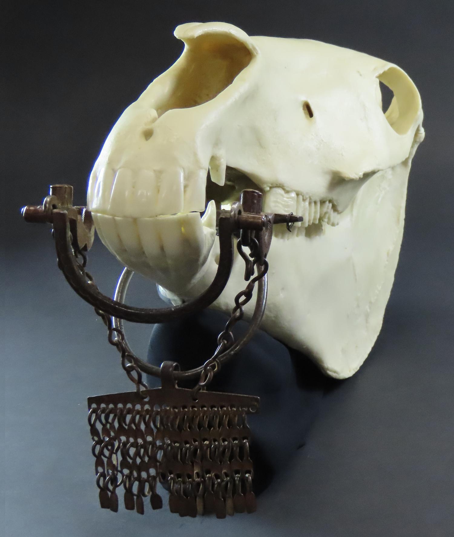 horse skull replica with bit