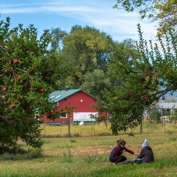 people sitting under apple treesom farm