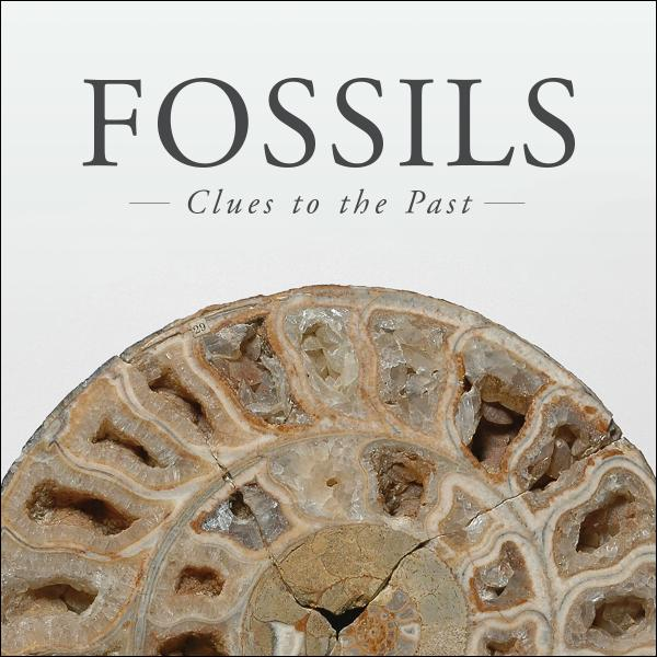 Fossils: Clues to the Past