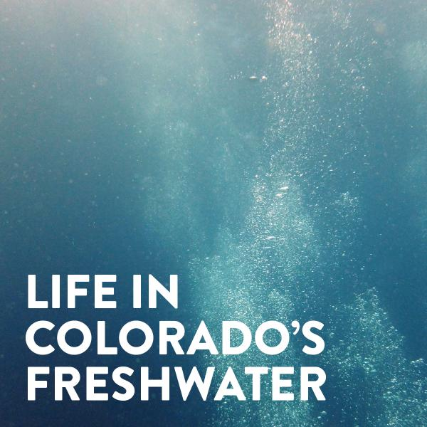 Life in Colorado's Freshwater